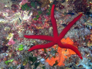 (Italiano) 3⁰ Scientific Diving Summer School